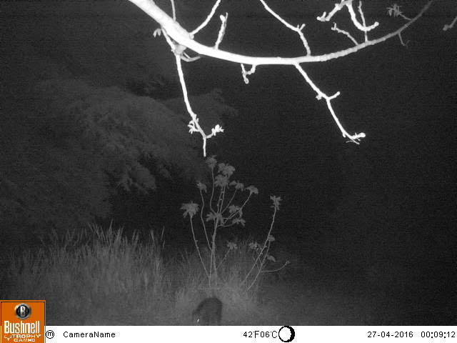 Bushnell Trophy Cam 119598, photos