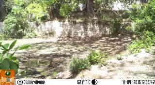 Bushnell Trophy Cam 119598, qualité photo couleur