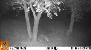 Bushnell Trophy Cam 119598, qualité photo noir et blanc