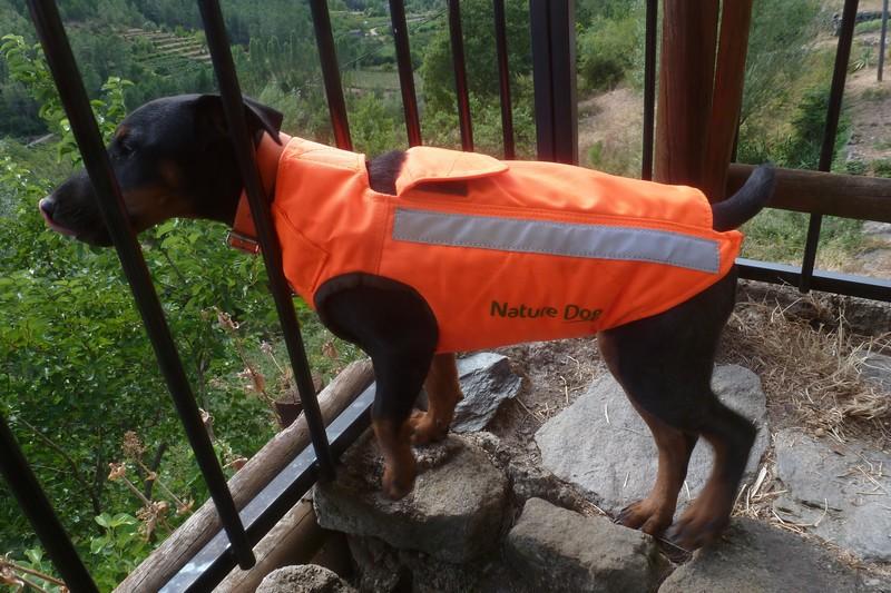 gilet de protection chien de sanglier, lequel choisir ?