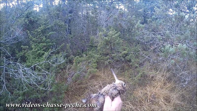 chasse à la bécasse