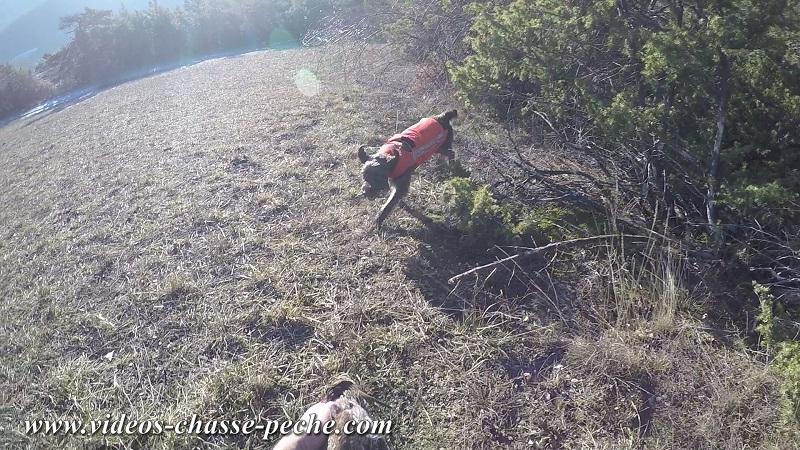 chasse bécasse