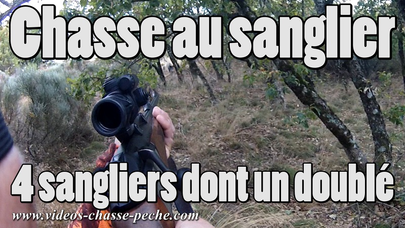 chasse au sanglier