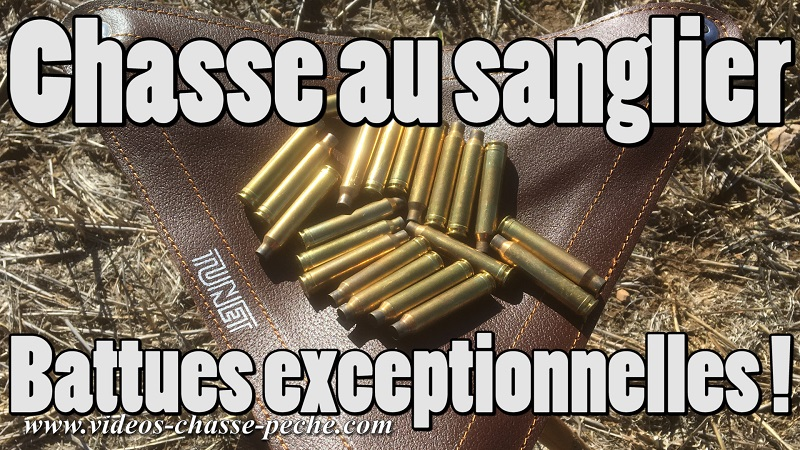 chasse sanglier