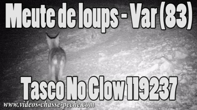 Loups dans le Var