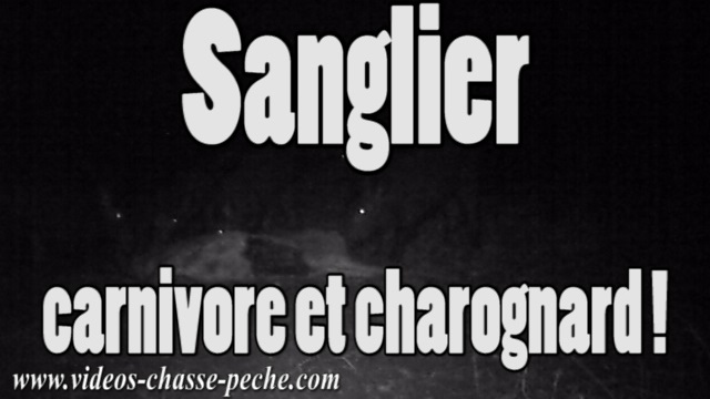 compagnie sangliers