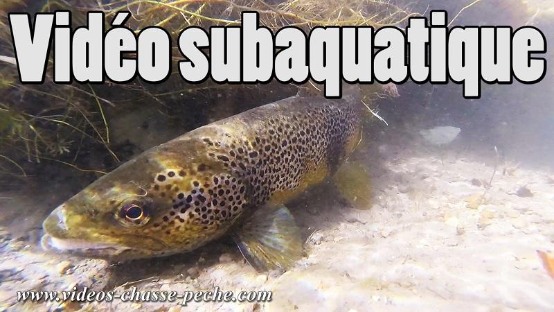 Vidéo subaquatique